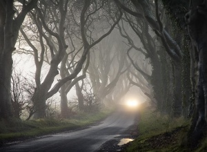 The Dark Hedges © Gary McParland